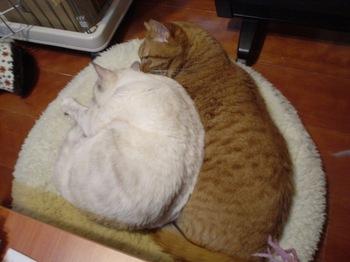 2011Jan3-Ram&Sunny1.jpg