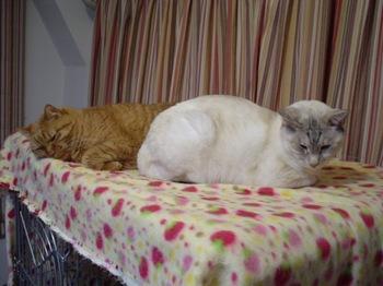 2011Jan3-Ram&Sunny5.jpg