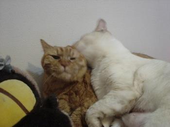 2012Apr21-Ram&Sunny.jpg