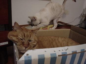 2012Apr23-Ram&Sunny.jpg