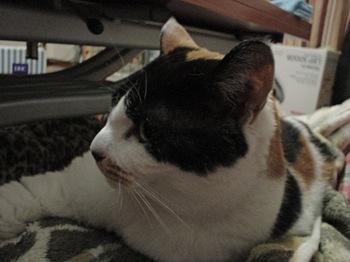 2012Apr24-Donna2.jpg