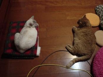 2012Apr28-Ram&Sunny.jpg