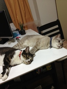 2012Aug22-Atomu&Maruko3.jpg