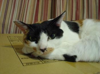 2012Aug23-Donna1.jpg