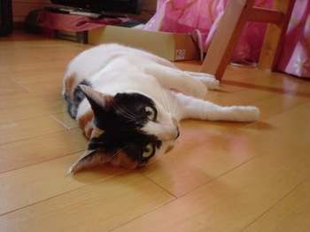 2012Aug26-Donna1.jpg