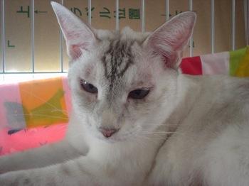 2012Aug31-Sunny7.jpg