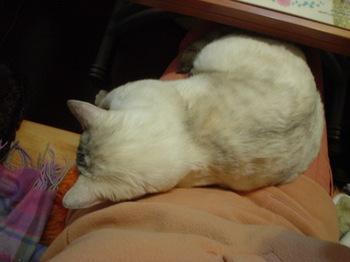 2012Dec22-Sunny4.jpg