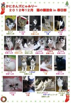 2012年12月かにさんズにゃみりー譲渡会ij春日部_参加猫.jpg
