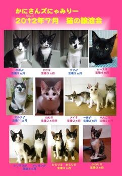 2012年7月譲渡会参加猫ポスター.jpg