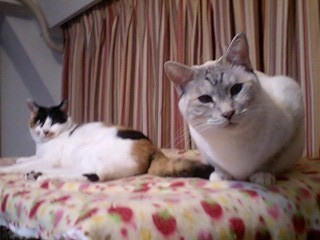 2012Feb11-Donna&Sunny3.jpg