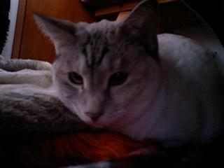2012Feb21-Sunny1.jpg