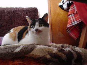 2012Jan2-Donna3.jpg