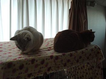 2012Jan24-Ram&Sunny2.jpg