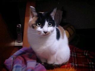 2012Jan25-Donna1.jpg