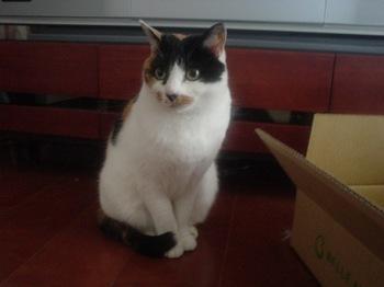 2012Jan27-Donna2.jpg