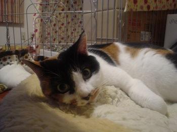2012Jan27-Donna3.jpg