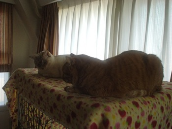 2012Jan28-Ram&Sunny1.jpg