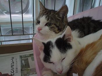 2012Jan29-Miita&Popeye.jpg