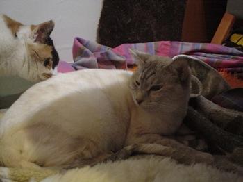 2012Jan29-Sunny1.jpg