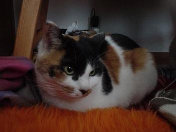 2012Jan30-Donna3.jpg