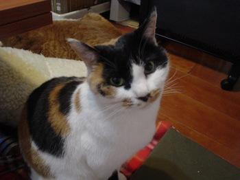 2012Jan30-Donna4.jpg