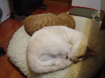 2012Jan30-Ram&Sunny1.jpg