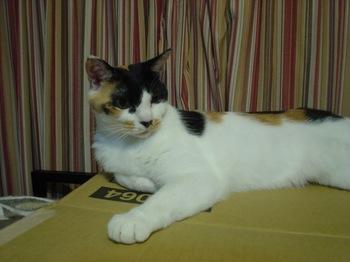 2012Jul23-Donna1.jpg