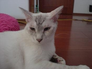 2012Jul30-Sunny4.jpg