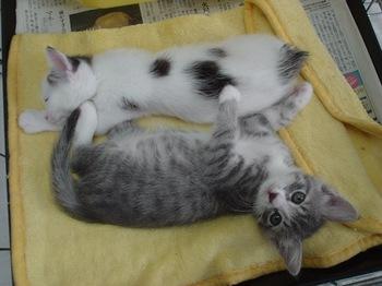 2012Jun24-Mugi&Ikkyuu2.jpg