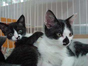 2012Jun24-Pipi&Pupu1.jpg