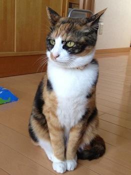 2012Jun27-Ichigochan.jpg