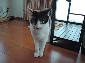 2012Jun28-Donna4.jpg