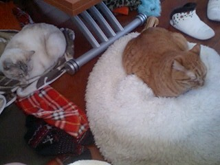 2012Mar26-Ram&Sunny2.jpg