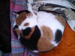 2012Mar28-Donna2.jpg