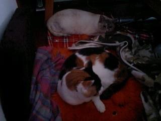 2012Mar30-Donna&Sunny.jpg