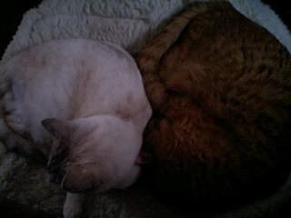 2012Mar31-Ram&Sunny2.jpg