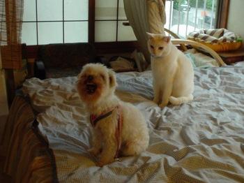 2012May25-Hana&Kin1.jpg