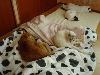2012May26-Ram,Donna&Sunny1.jpg