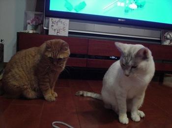 2012Nov22-Ram&Sunny3.jpg
