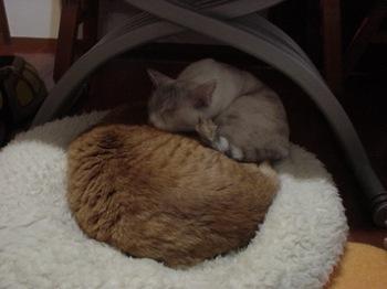 2012Nov27-Ram&Sunny.jpg