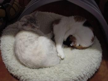 2012Nov30-Donna&Sunny2.jpg