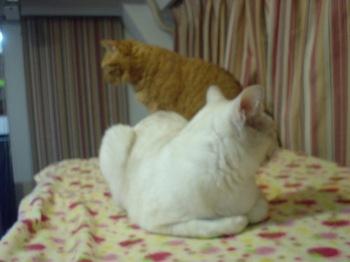2012Oct22-Ram&Sunny1.jpg