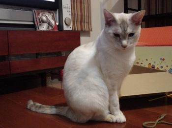 2012Oct22-Sunny9.jpg