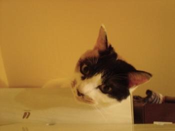 2012Oct24-Donna4.jpg