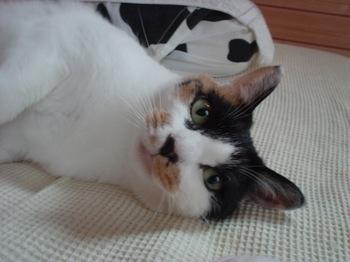 2012Oct25-Donna1.jpg