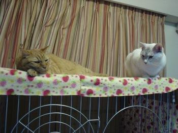 2012Oct25-Ram&Sunny.jpg
