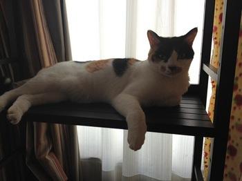 2012Oct27-Donna2.jpg