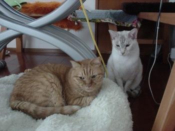 2012Oct27-Ram&Sunny2.jpg