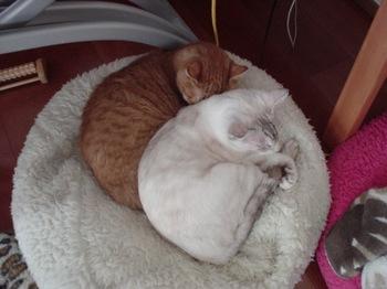 2012Oct27-Ram&Sunny3.jpg