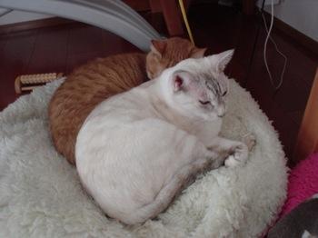 2012Oct27-Ram&Sunny4.jpg
